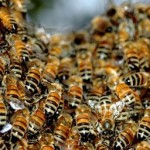 coral springs bee removal